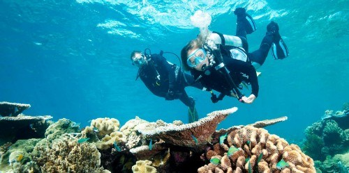 backpacker diving tours