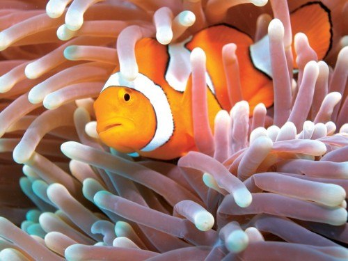 great barrier reef backpacker tours
